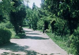 Parkelyje
