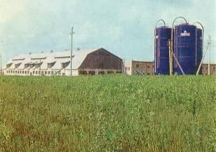Raudonosios žvaigždės kolūkio ferma ir šienainio bokštai. Verėduva. Apie 1978 metus. Iš Knygos Raseiniai.